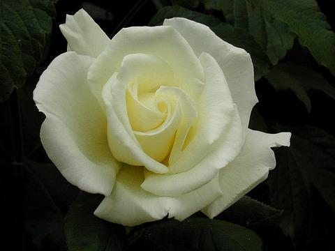 rosa_fountainsquere1.jpg