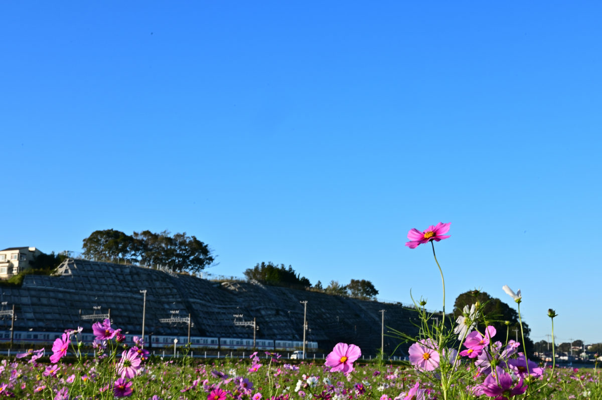 風車と京成電鉄