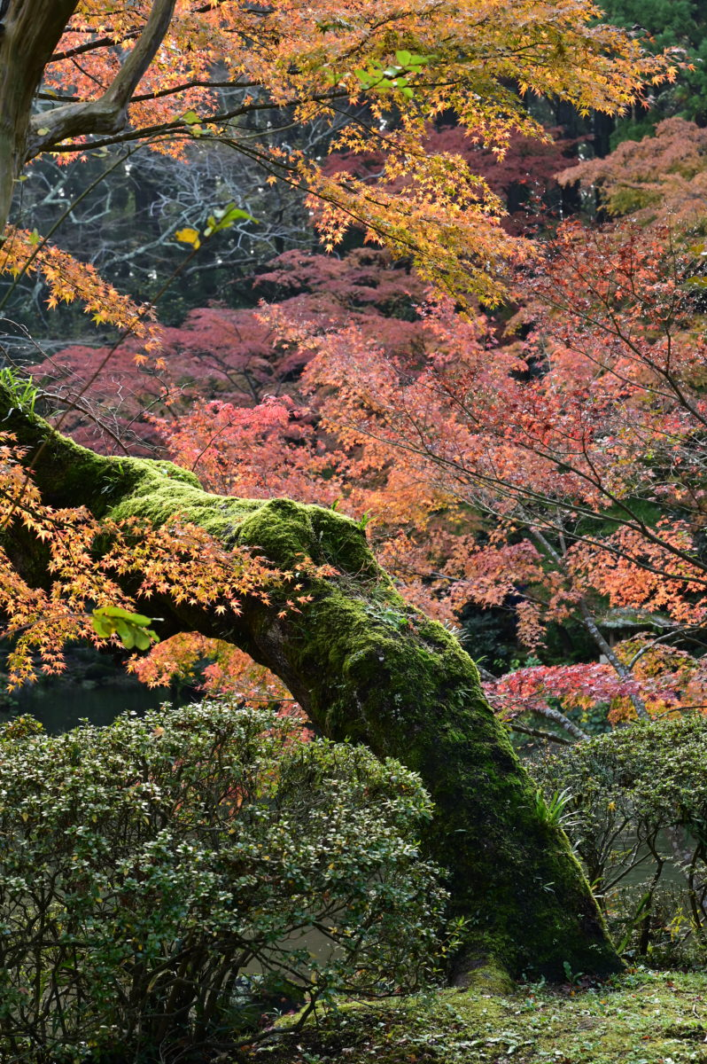 成田山公園3