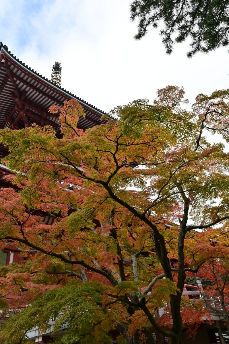 成田山公園 新勝寺平和大塔