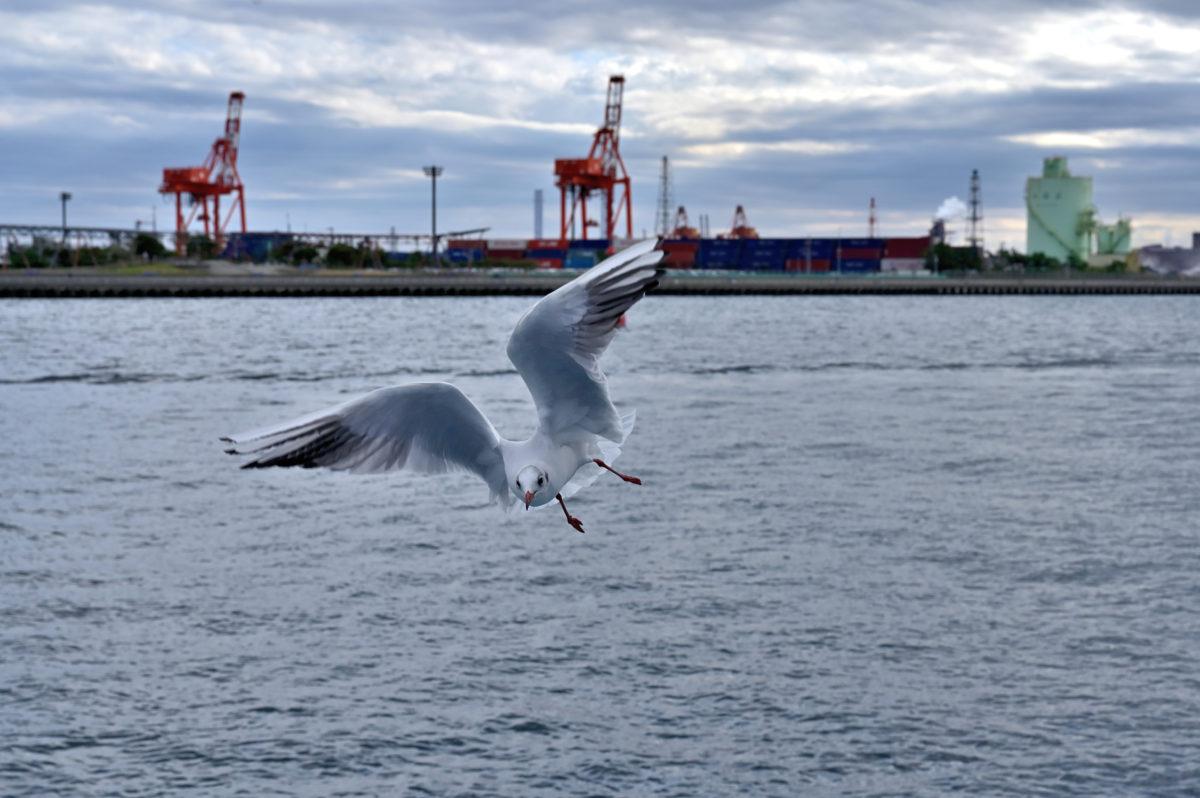 千葉港めぐり観光船