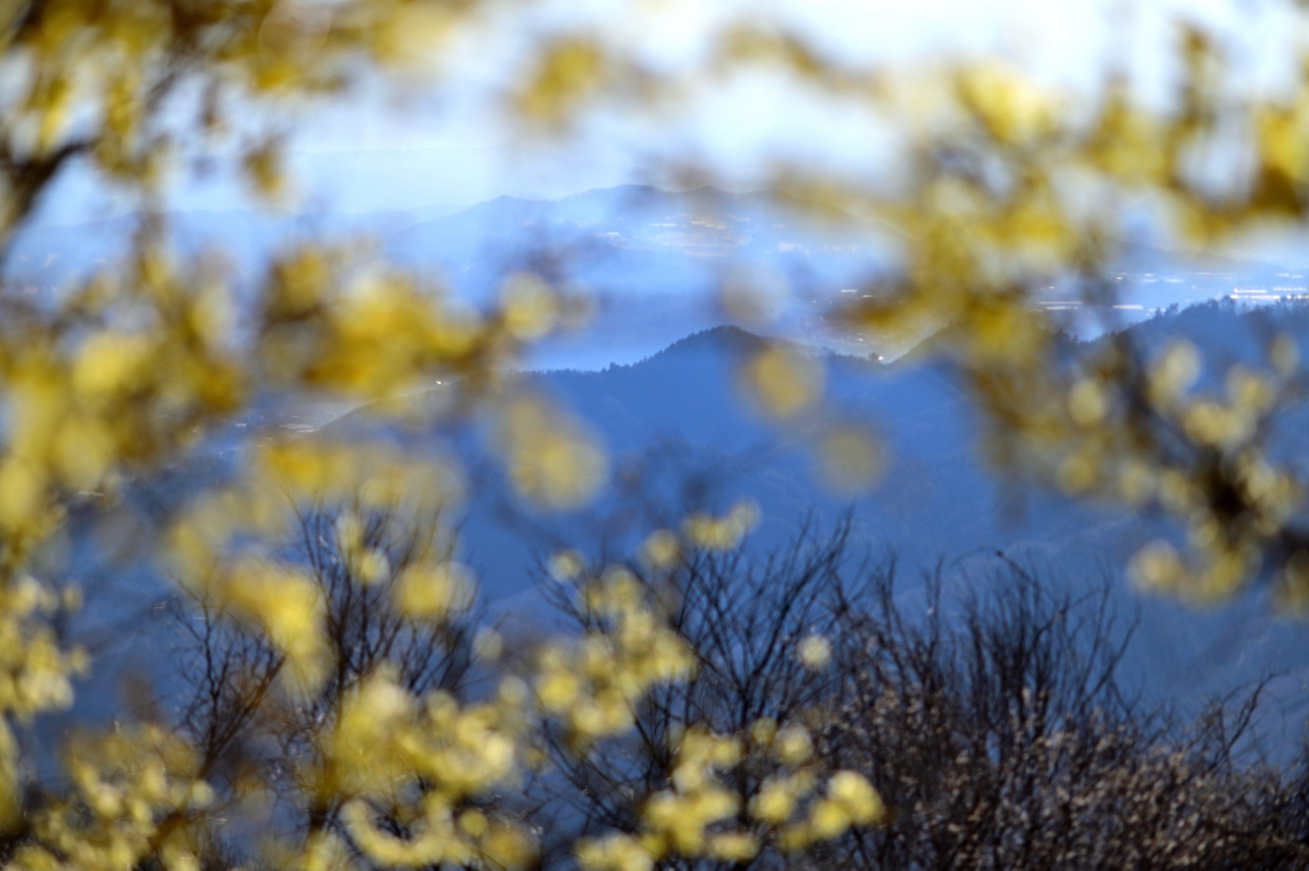 宝登山 ロウバイ祭り11