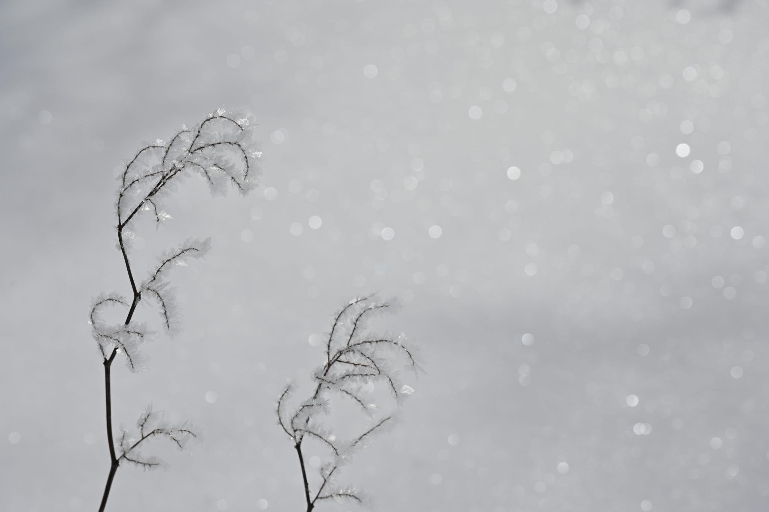 志賀高原写真教室 石の湯ロッジ前庭 「氷華」