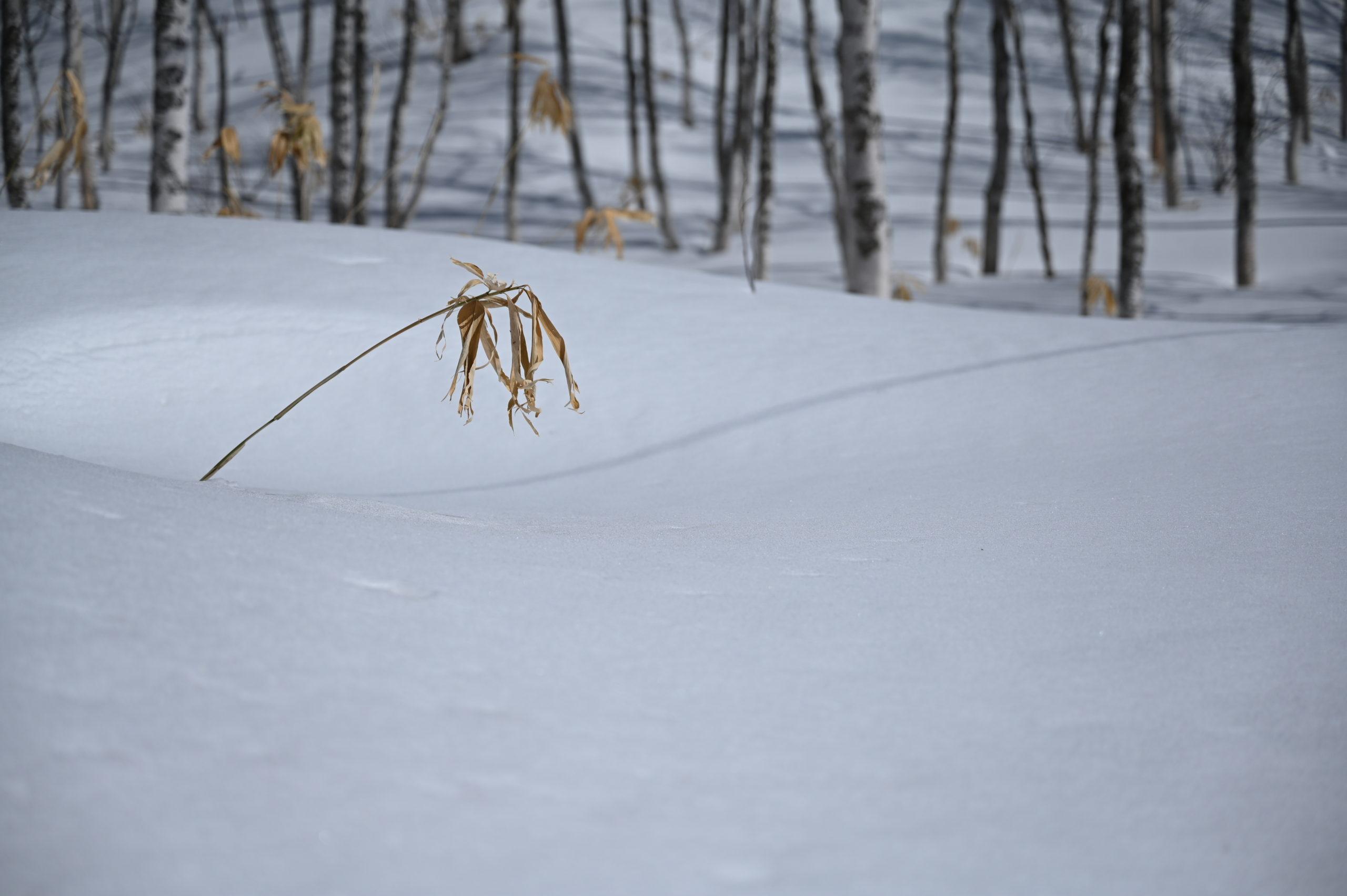 志賀高原写真教室 石の湯ロッジの裏の道から林を臨む