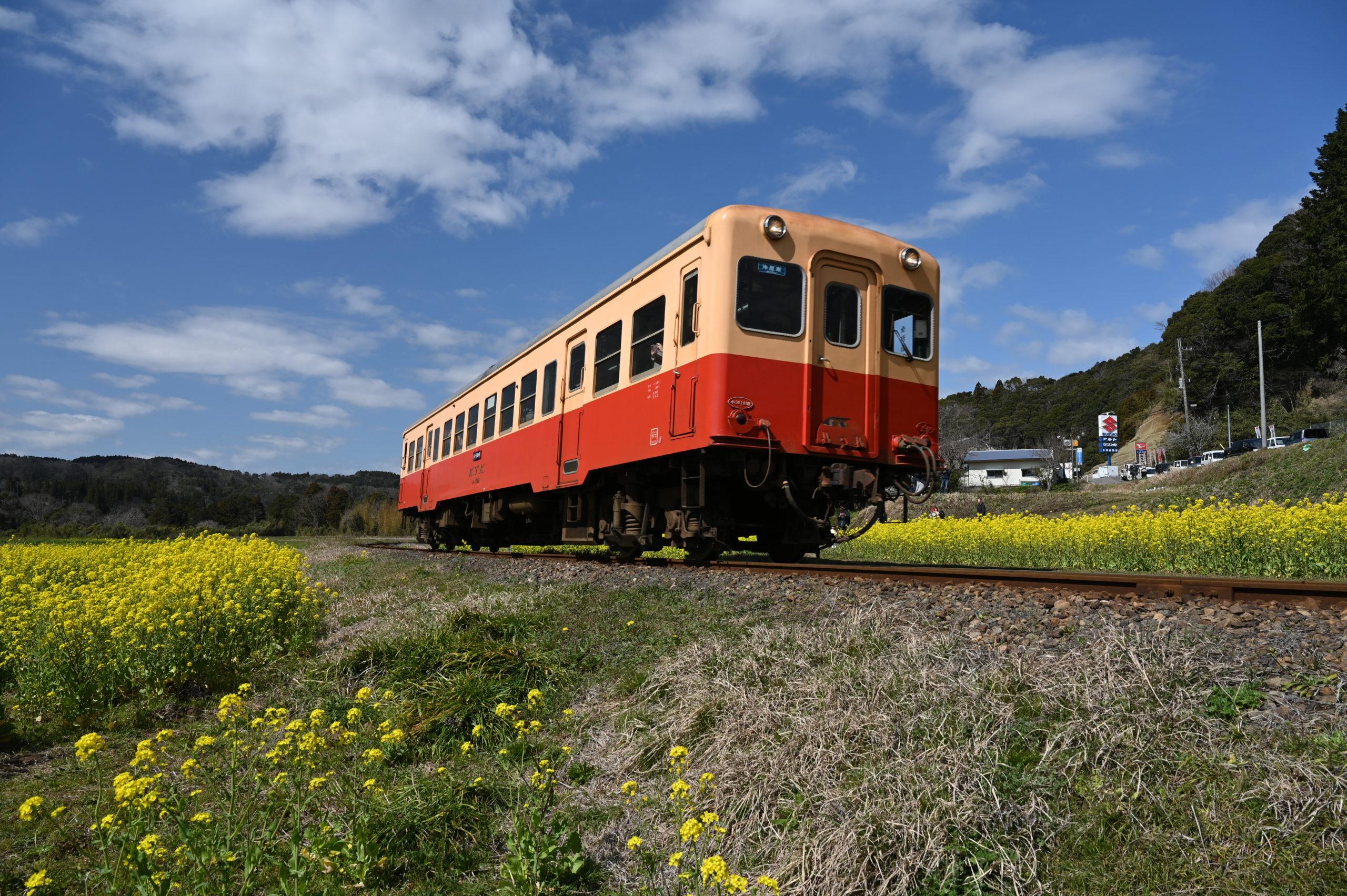 小湊鉄道 石神菜の花畑